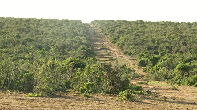 Landscape P.E 2