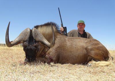 Black Wildebeest (15)