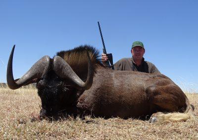 Black Wildebeest (16)