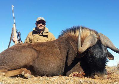 Black Wildebeest (2)