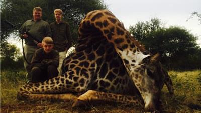 Lungile Safaris Giraffe