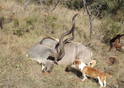 Lungile Safaris Kudu (2)