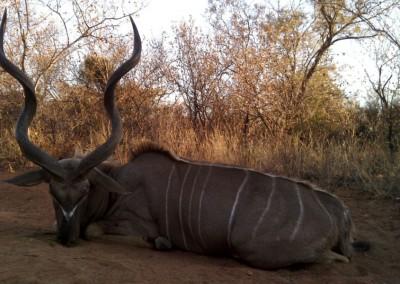Lungile Safaris Kudu (20)
