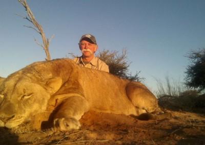 Lungile Safaris Lion (1)