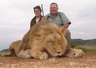 Lungile Safaris Lion (3)