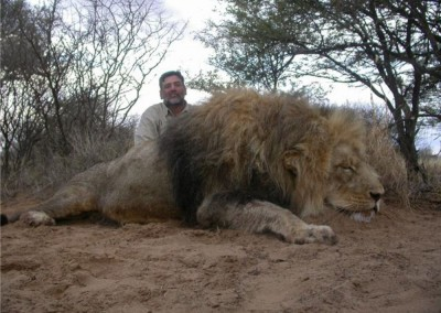 Lungile Safaris Lion (4)
