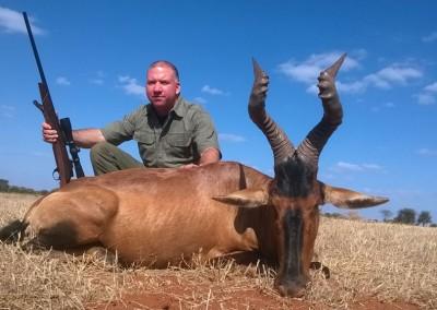 Lungile Safaris Red Hartebeest (2)