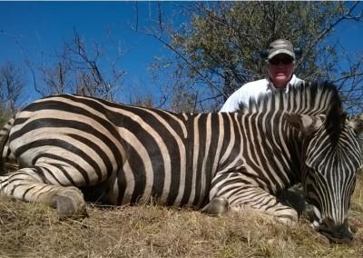 Lungile Safaris Zebra (2)