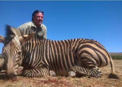 Lungile Safaris Zebra (22)