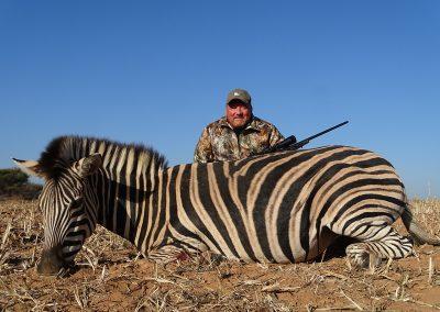 Zebra (2)